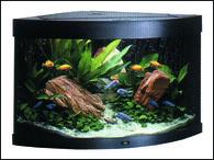 Akvárium JUWEL set Trigon 190 černé (190l)