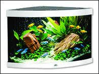 Akvárium JUWEL set Trigon 190 bílé (190l)