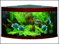 Akvárium JUWEL set Trigon 190 tmavě hnědé (190l)