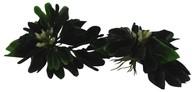 Plovoucí Lucky Reptile Turtle Plants Balení: Water Hyazinth-s květem 6 ks