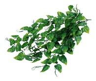 Lucky Reptile Jungle Plants Balení: Philo cca 50 cm
