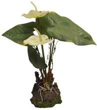 Kvetoucí Lucky Reptile Jungle Plants Balení: Anthurium - bílé cca 25 cm