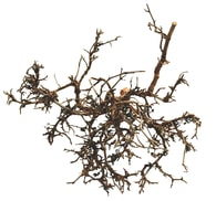 Lucky Reptile Desert Bushes Zboží: Desert Bush - vybělené cca 25-40 cm