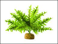 Rostlina EXO TERRA Boston Fern malý (1ks)