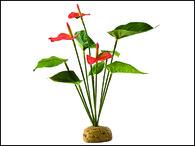 Rostlina EXO TERRA Anthurium Bush (1ks)