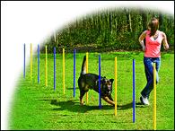 Slalom DOG FANTASY Agility (1ks)