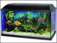 Akvárium set CAT-GATO Pacific 60 x 30 x 30 cm (54l)