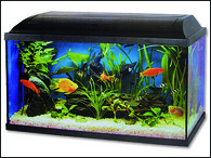 Akvarium set CAT-GATO 100 x 40 x 40 cm (160l)