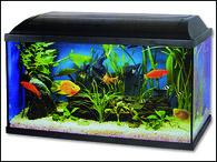 Akvarium set CAT-GATO 80 x 30 x 40 cm (96l)
